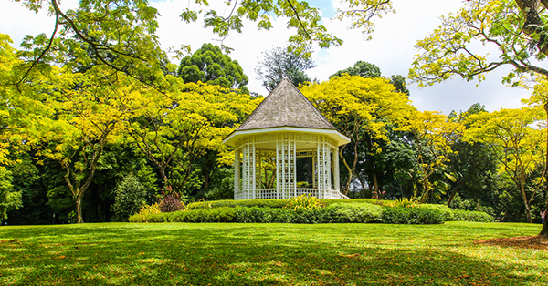 free attractions in Singapore_Singapore Botanical Gardens