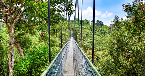 free attractions in Singapore_Treetop Walk