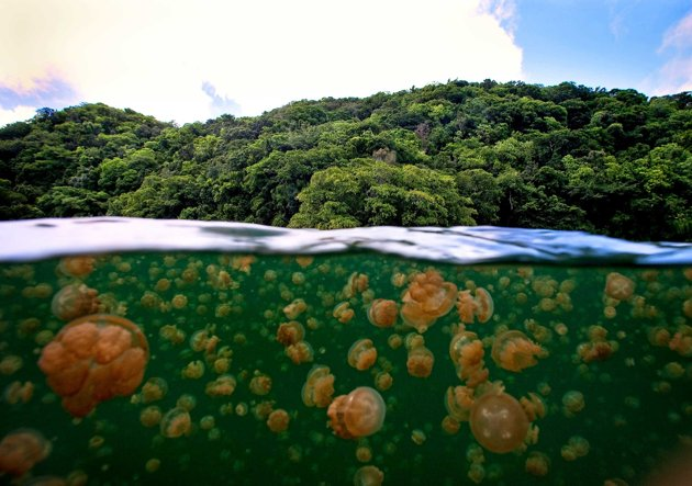 Palau-Jellyfish-Lake-05-jpg_164224