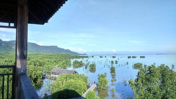 Mangrove