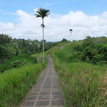 Campuhan Ridge Walk