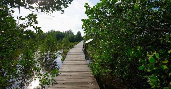 7 Spot Wisata di Karimunjawa yang Menakjubkan - Hutan Mangrove Pulau Kemujan
