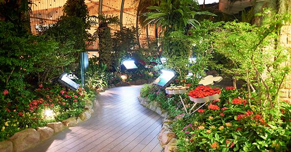 Changi Airport Fasilitas Gratis - Butterfly Garden