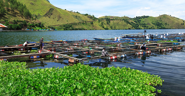 Facts of the Beauty of Lake Toba - Batak Fish
