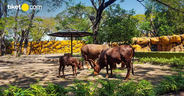 Kebun Binatang Surabaya Sarana Edukasi Dengan Berbagai