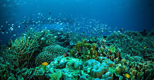 Gambar Pemandangan Alam Terindah - Taman Laut Bunaken