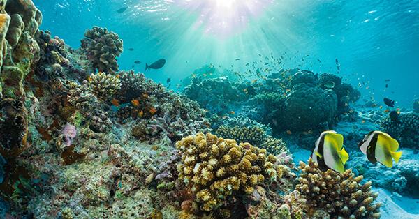 Liburan Ke Maldives - Snorkeling