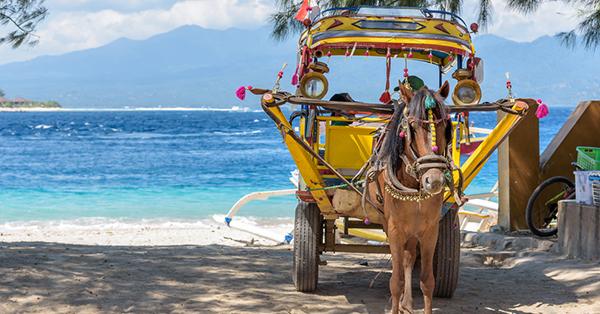 Transportasi Pilihan Pulau Lombok-Cidomo