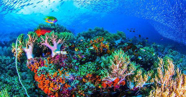 Pemandangan Bawah Laut Indonesia - Karimun Jawa