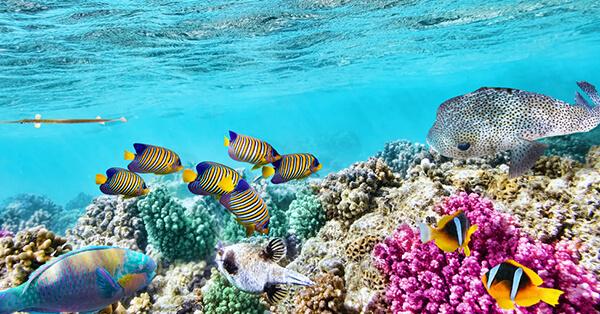 Pemandangan Bawah Laut Indonesia - Pulau Komodo