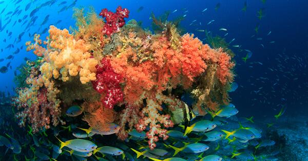 Pemandangan Bawah Laut Indonesia - Raja Ampat