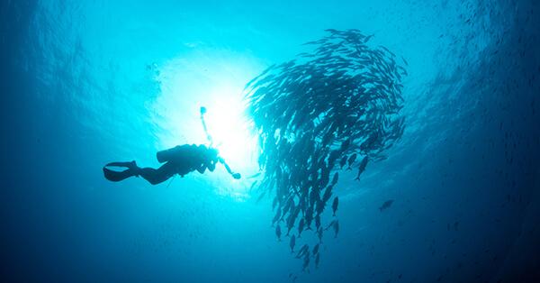 Pemandangan Bawah Laut Indonesia - Wakatobi