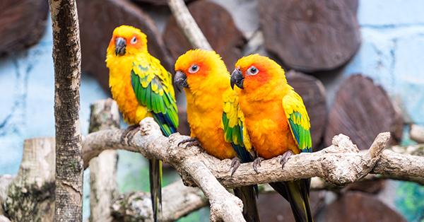 Perbedaan Jatim Park 1, 2 & 3 - Jatim Park 2 Batu Secret Zoo