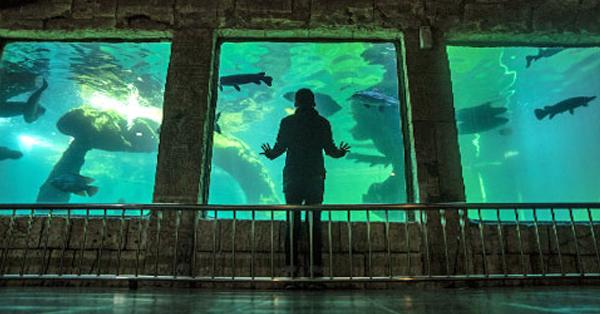 Perbedaan Jatim Park 1, 2 dan 3 - Jatim Park 2 Batu Secret Zoo Aquarium