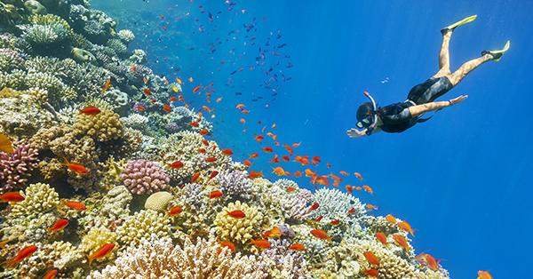 Pulau Cinta Gorontalo - Snorkeling