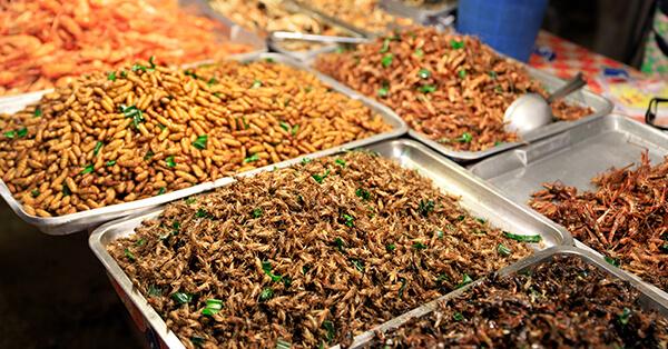 Rekomendasi Kuliner Bangkok - Fried Bugs