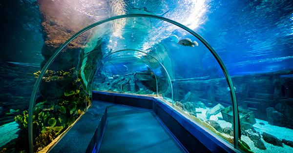 Seaworld Ancol - Menelusuri Terowongan Bawah Air