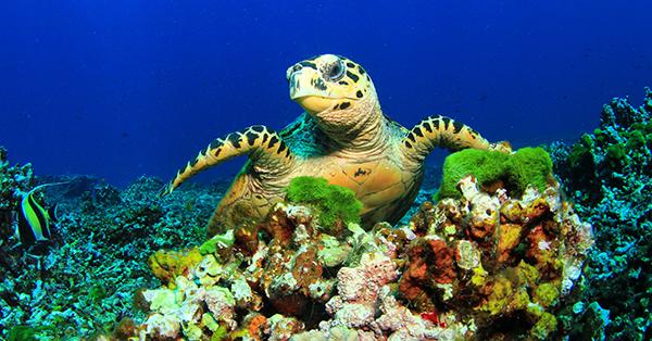 Snorkeling Bali - Nusa Lembongan