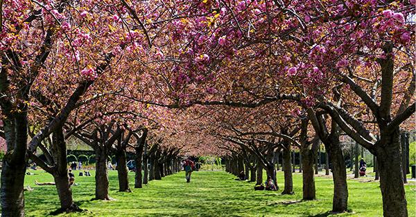 romantic things to do in New York_brooklyn botanic garden