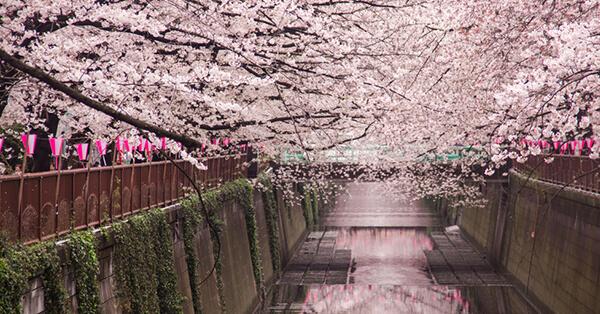 Tempat Instagramable di Tokyo - Meguro River