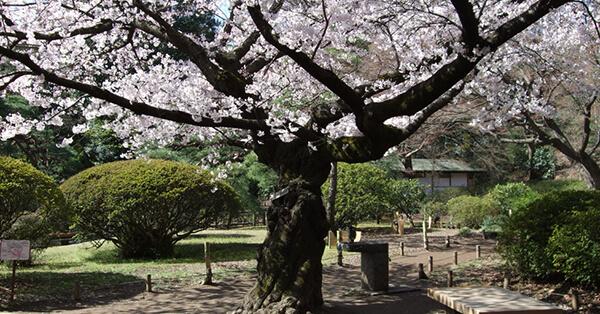 Tempat Instagramable di Tokyo - Rikugien Garden