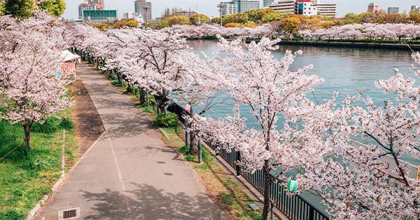 Taman Kema Sakuranomiya