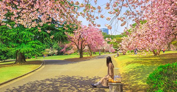 Tempat Melihat Bunga Sakura - Shinjuku Gyoen