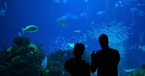 Tempat Merayakan Valentine di Jakarta - Jakarta Aquarium Neo Soho