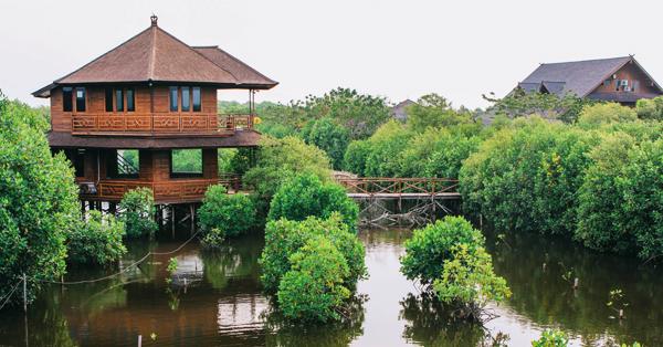 Tempat Merayakan Valentine di Jakarta - Taman Wisata Alam Mangroove
