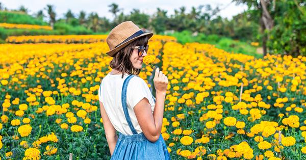 Tempat Prewedding di Bali_blog (wonderful indonesia)_Ladang Bunga Marigold