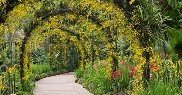Tempat Romantis di Singapura_blog_Singapore Botanic Gardens