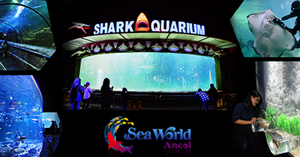 Tempat Wisata Anak di Jakarta - Seaworld