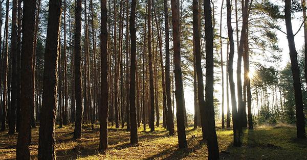 Tempat Wisata Gratis di Bandung - Hutan Pinus Rahong