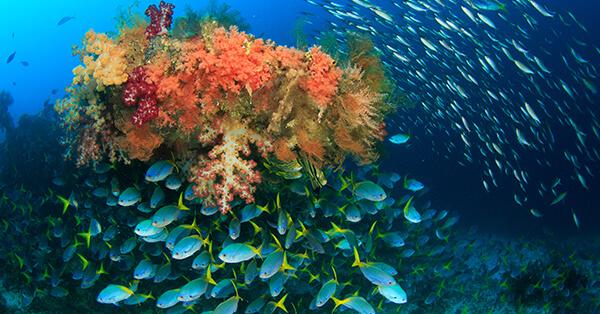 Tempat Wisata Pulo Cinta Gorontalo - Bawah Laut