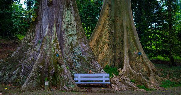 Tempat Wisata Terlarang - pohon jodoh