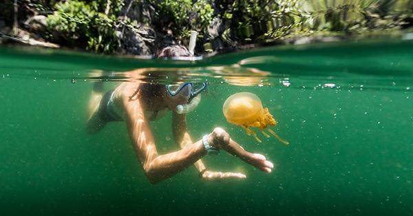 Tempat Wisata Kalimantan Timur - Danau Kakaban