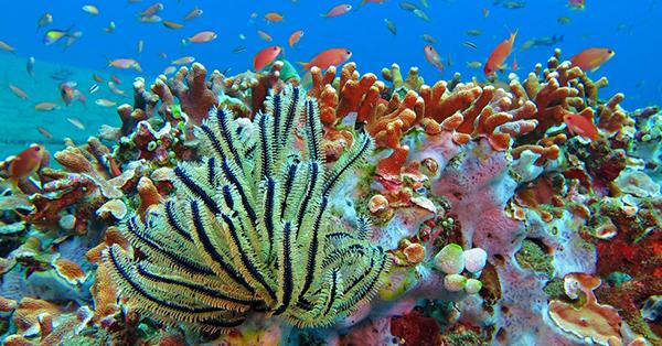 Tempat Wisata Manado - Taman Laut Bunaken
