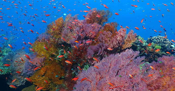 Tempat Wisata Manado - Taman Laut Tumbak