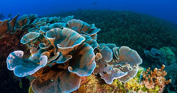 Tempat Wisata di Pattaya - Coral Island