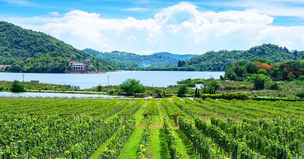 Tempat Wisata di Pattaya - Silverlake