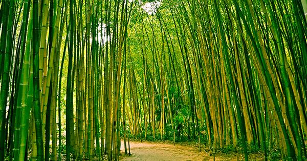 Tempat Wisata di Surabaya - Hutan Bambu Keputih