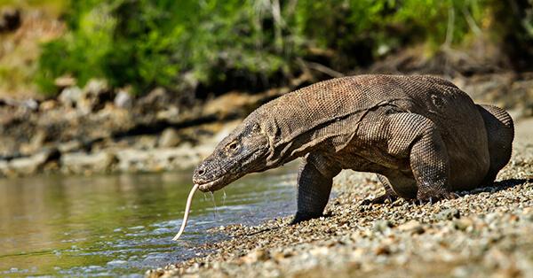 Wisata Petualangan Indonesia - Taman Nasional Komodo