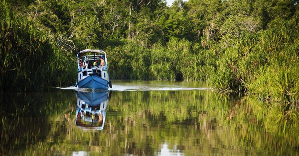 Wisata Petualangan Indonesia - Taman Nasional Tanjung Puting KalimantanWisata Petualangan Indonesia - Taman Nasional Tanjung Puting Kalimantan