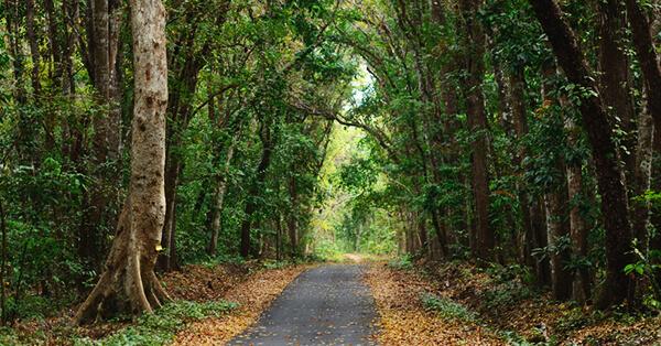 Wisata Petualangan Taman Nasional Alas Purwo