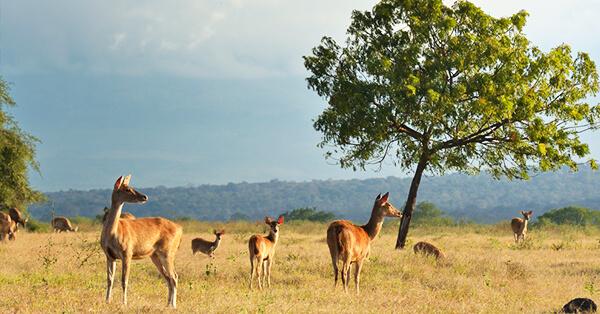 Wisata Petualangan Taman Nasional Baluran