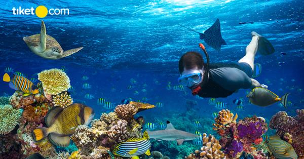 spot snorkeling di Malang