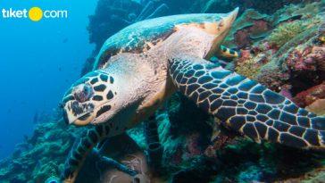 Tempat Wisata Jakarta Aquarium