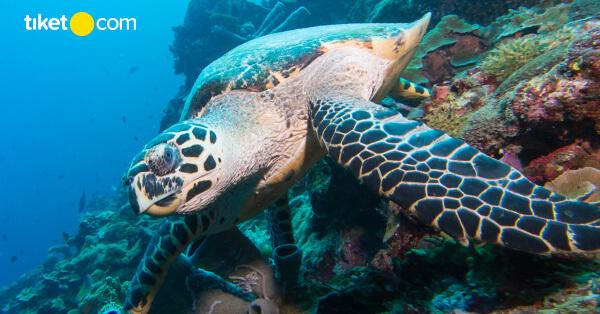 Tempat Wisata Jakarta Aquarium Dan 5 Fakta Uniknya Tiket Com